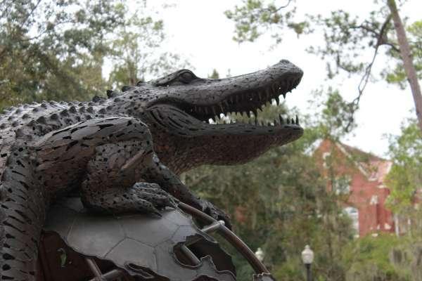 UF stock photo picture gator
