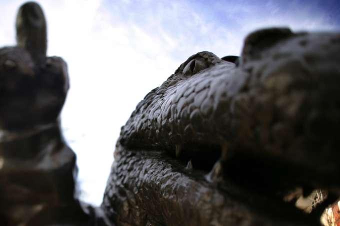 UF stock photo picture albert gator